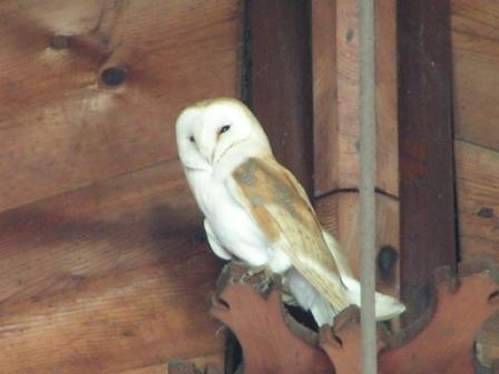 Church_Owl